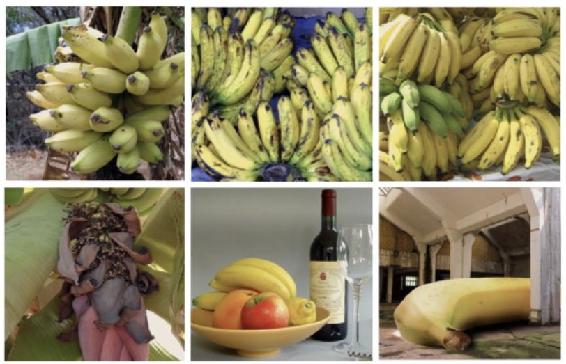 XAI Bananas