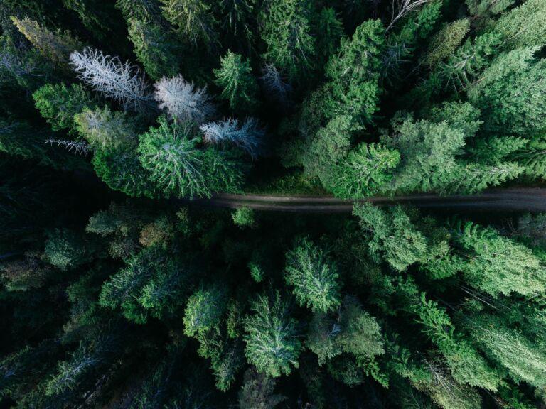 XAI forest